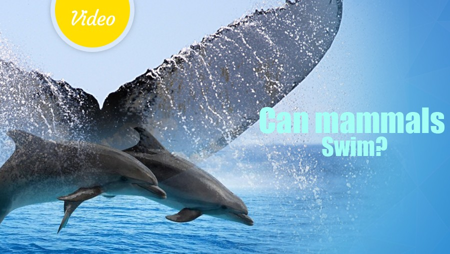 Can mammals Swim?<span class=